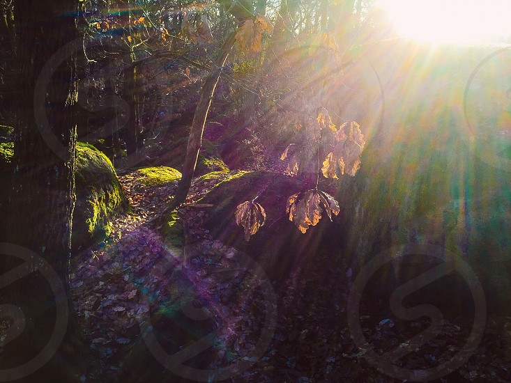Natural light rays forest woods nature sun fall autumn photo