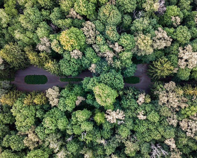 Beautiful top view of the greenery of trees on a summer day. Aerial view of the drone as a natural layout photo
