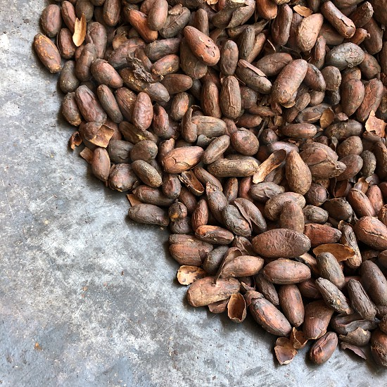 Minimalist cocoa cacao beans roasted food chocolate pan photo
