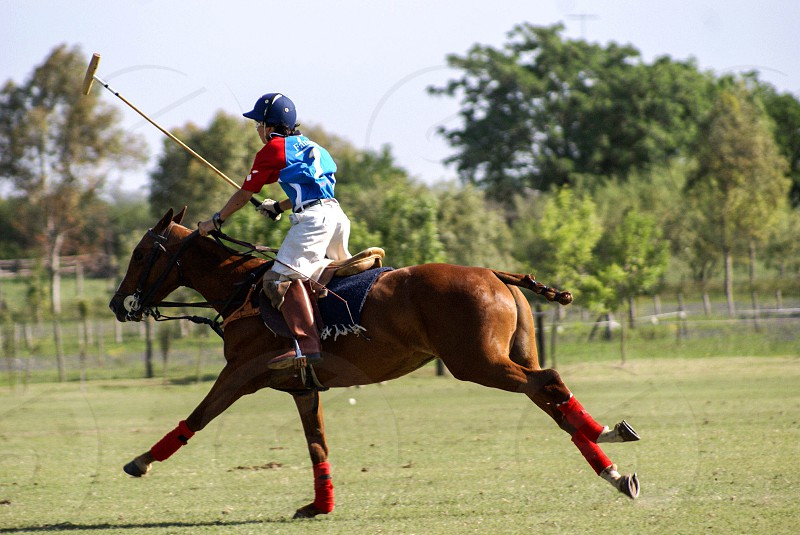 Polo game challenge horse field jockey club run photography photographer motion sharp clarity photo