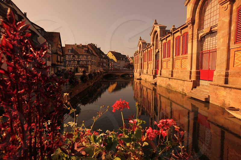 the old city of Colmar in  the province of Alsace in France in Europe photo