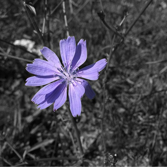 Spring flowers wild flowers purple Boston photo