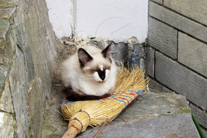 Cat on broom photo