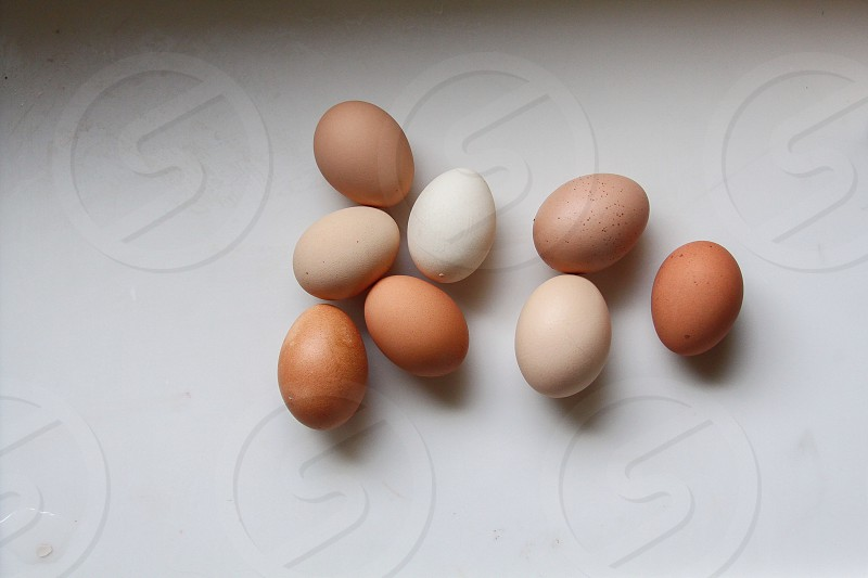 white and brown eggs on white surface photo