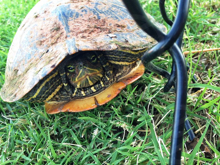 turtle in shell photo