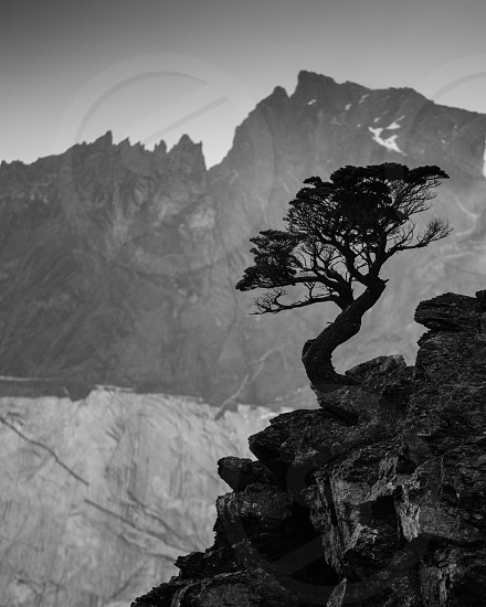 green tree on the side of a grey rocky mountain under grey sky photo