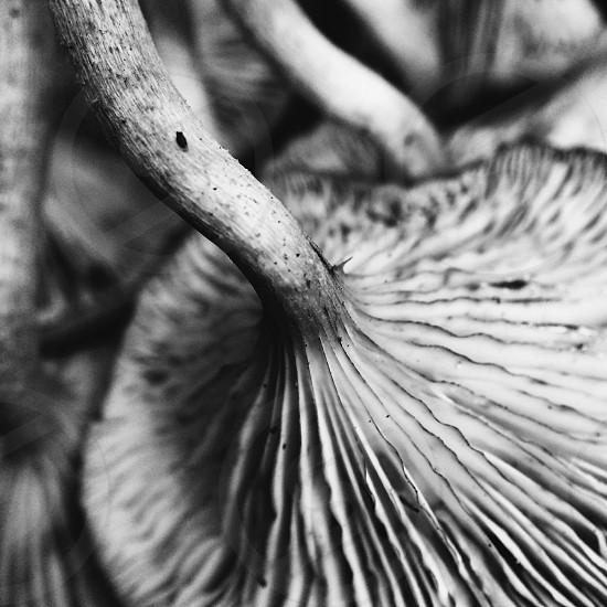 black and white closeup of wild mushroom photo