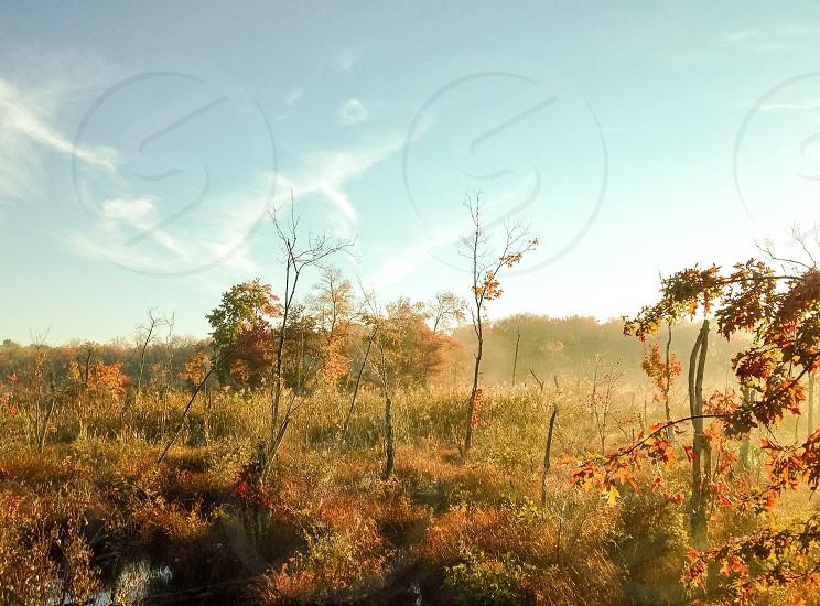 Swamp fog photo