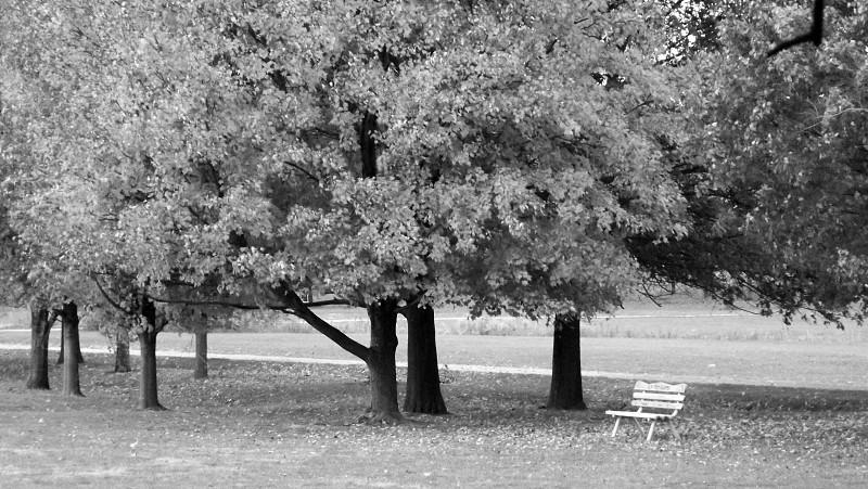 Bench park trees photo