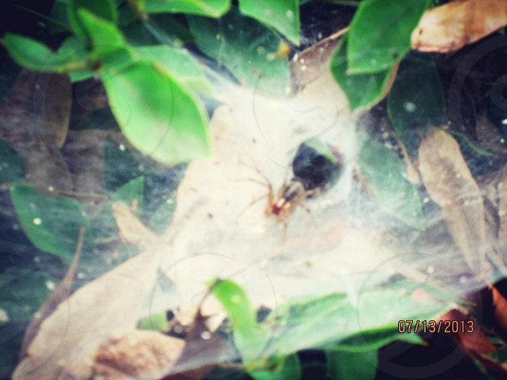 black spider in closeup photography photo