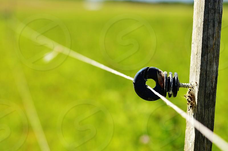 An electric shepherd in the fields photo