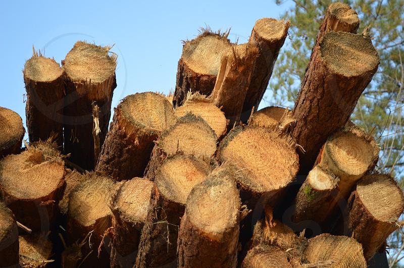 wooden trunks photo
