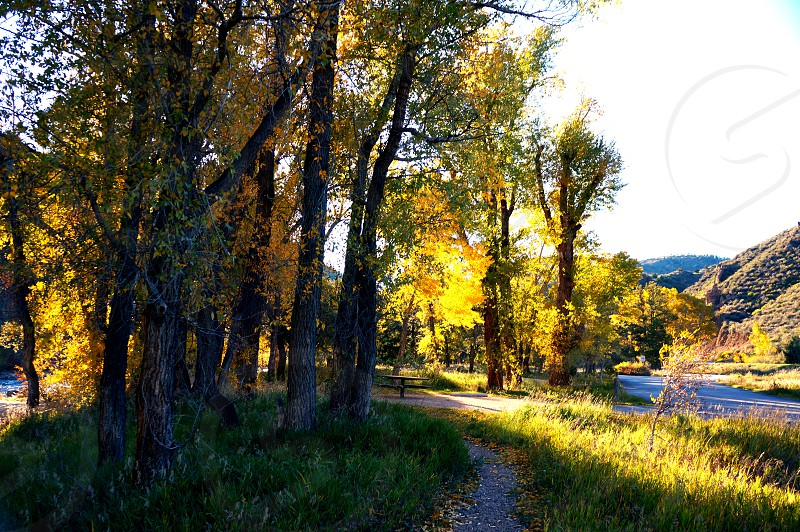 Colorado Rocky mountains trees aspens photo