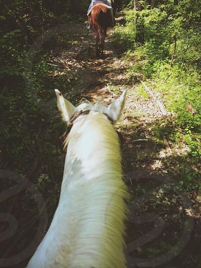 Horseback riding through wooded trail photo