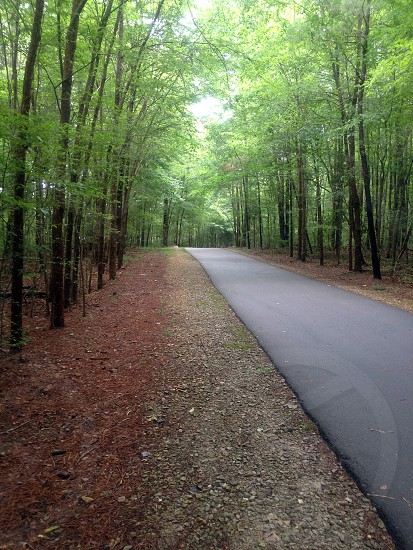 A walking path through Fred G. Bond Metro Park in Cary North Carolina photo
