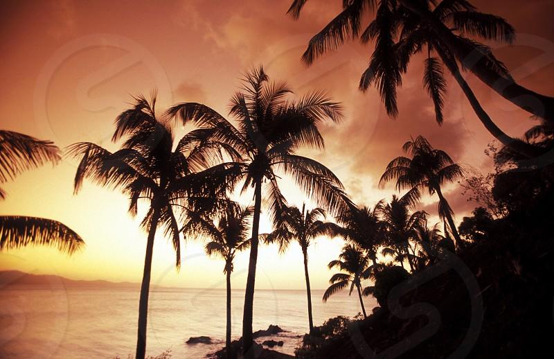 AFRICA COMOROS INDIAN OCEAN ANJOUAN ISLAND BEACH SUNSET COAST OCEAN PALM PALMTREE EVENING photo
