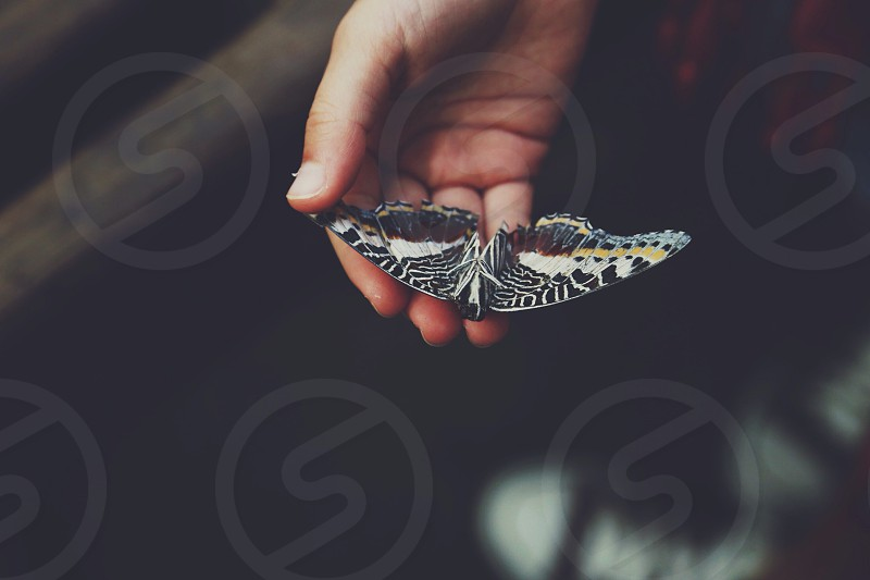 hand holding black white and yellow butterfly photo