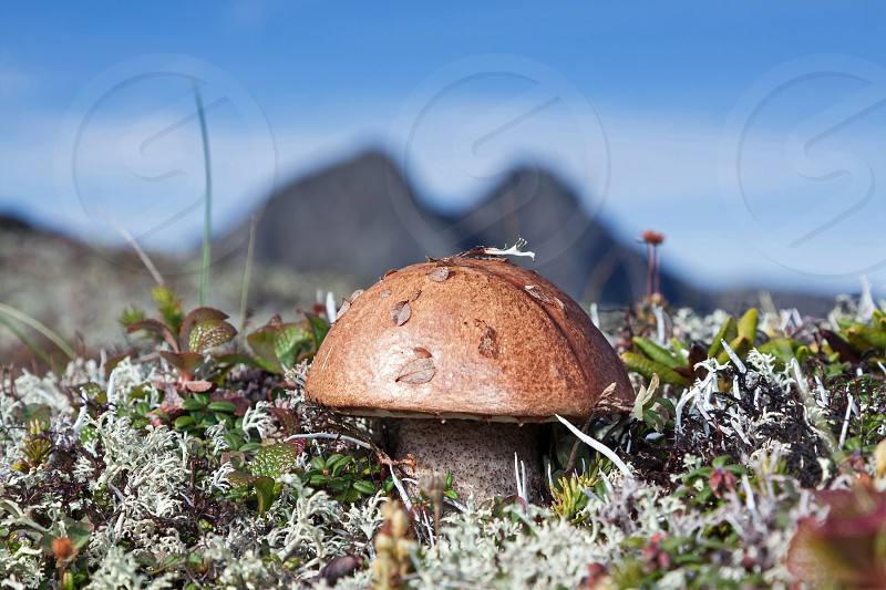 Cute lonely mushroom on background of mountains and blue sky on sunny day. photo