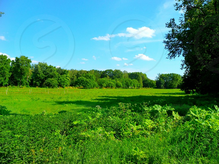 green grass plants and trees under blue and white sky during daytime photo