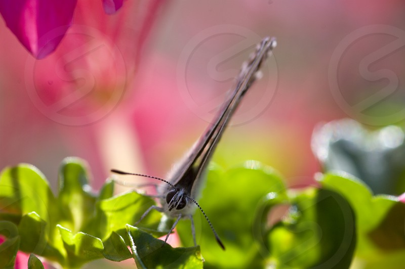 Spring pink green butterfly sun photo