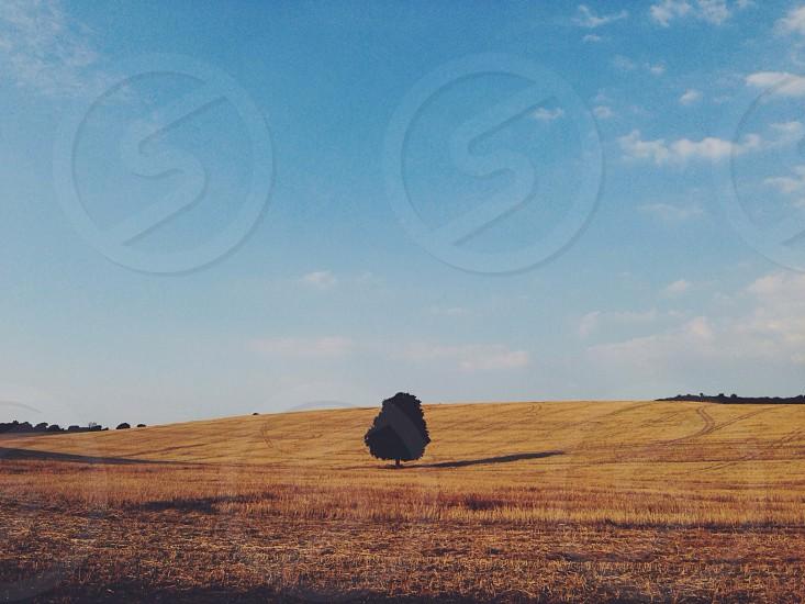 Lone tree isolated field empty wheat farmland countryside alone desolate landscape nature photo