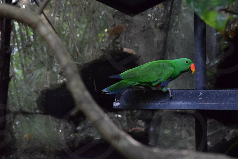 Bird zoo green parrot photo