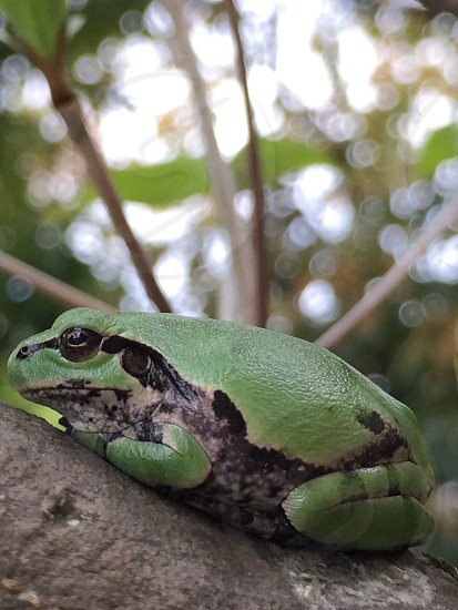 focus photography of green and black frog photo