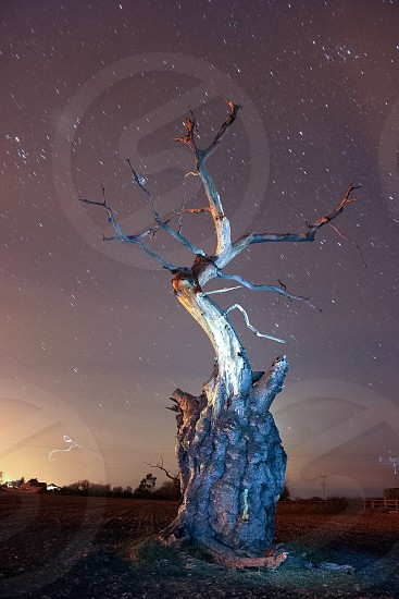 A tree lit up at night using light painting. Taken in Somerset England.   photo