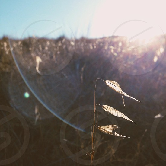 sun rays view photo