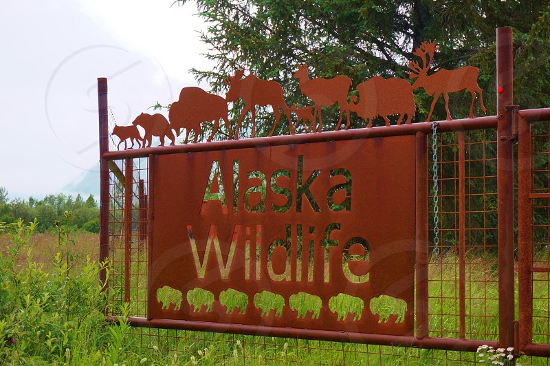 Elk moose and bear can be seen at the Alaska Wildlife Conservation Center a non profit organization dedicated to the conservation of Alaskan animals photo