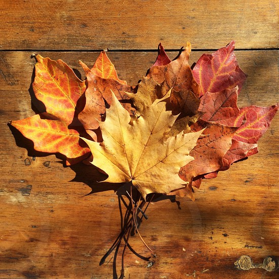 Fall leaves laying on a wooden table blending into the background photo