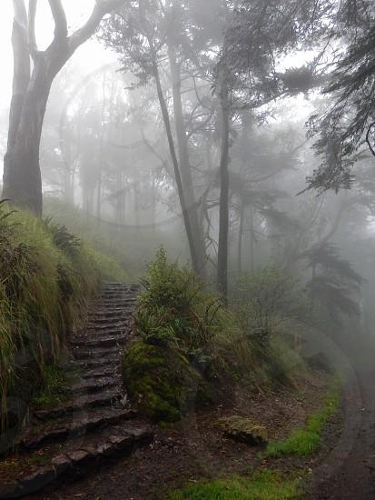 Mount Davidson photo