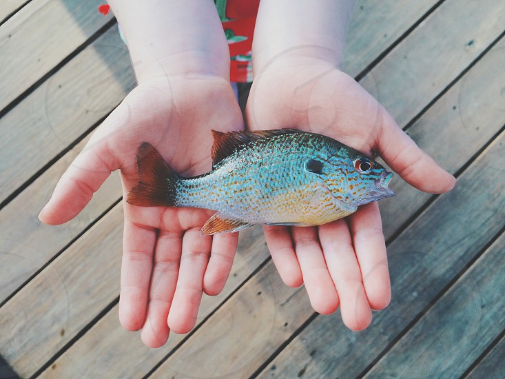 Fish fishing bluegill hands holding fish photo