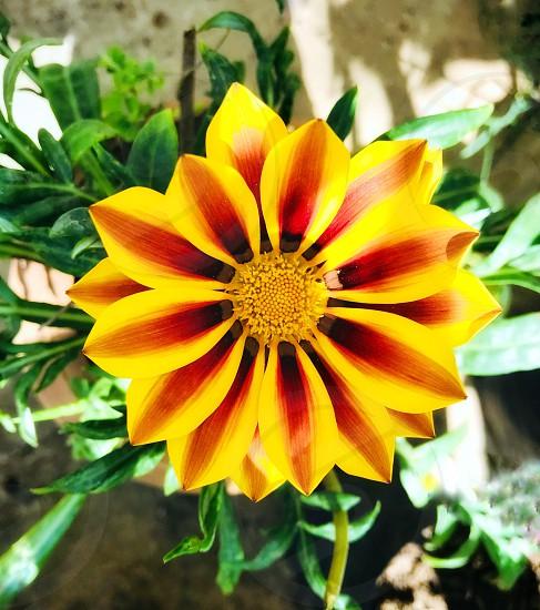 A beautiful golden flower  photo