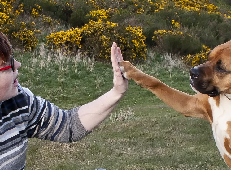 Dog giving a high five to his master. photo