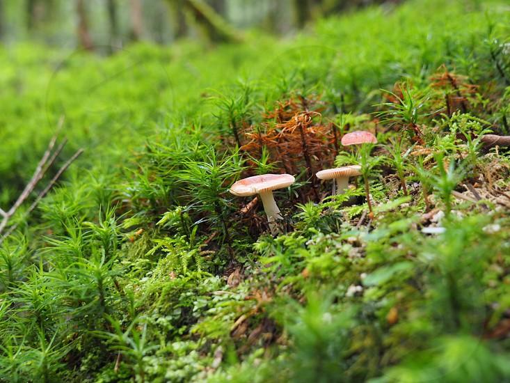 three mushrooms photo