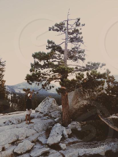 man in black standing on grey rocks looking up pine tree photo