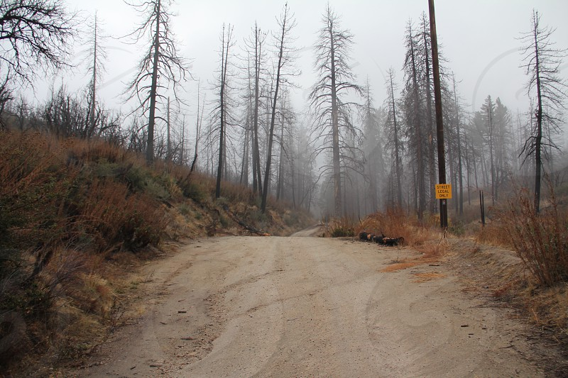 forest dirt road photo