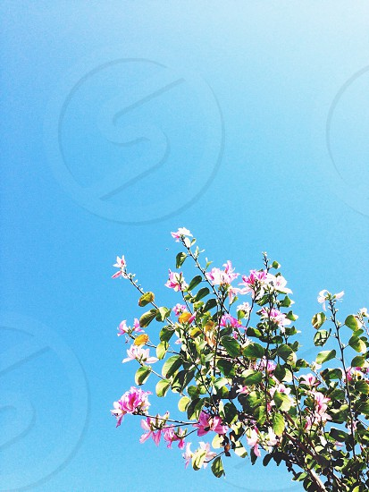pink flowers in the tree branch photo
