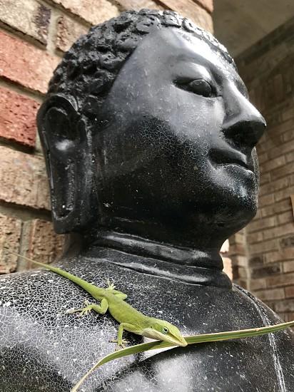 Green Buddha statue lizard anole green anole nature brick photo
