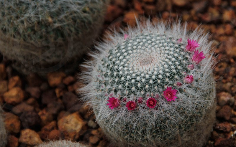 A Cactus with little tiny flowers photo
