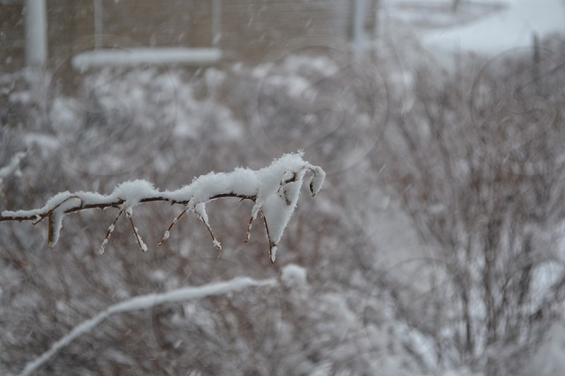 Snow settled on a branch! photo
