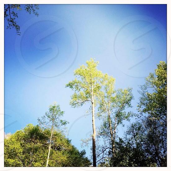 Tall tree landscape photo
