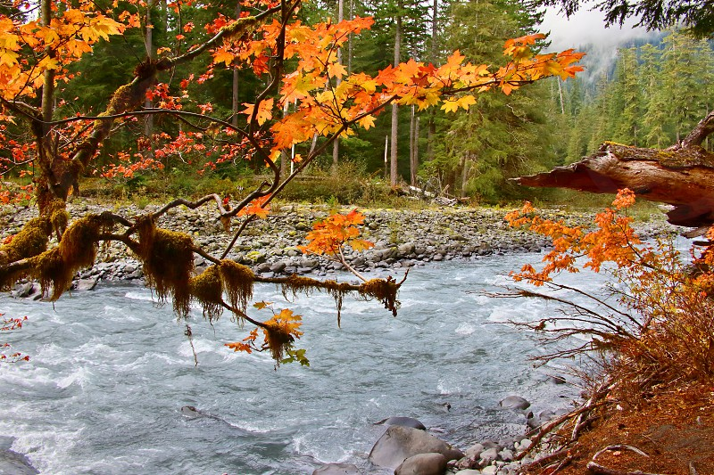 The Hoh River viewed from the Olympic rainforest.  Olympic National Park Washington. photo