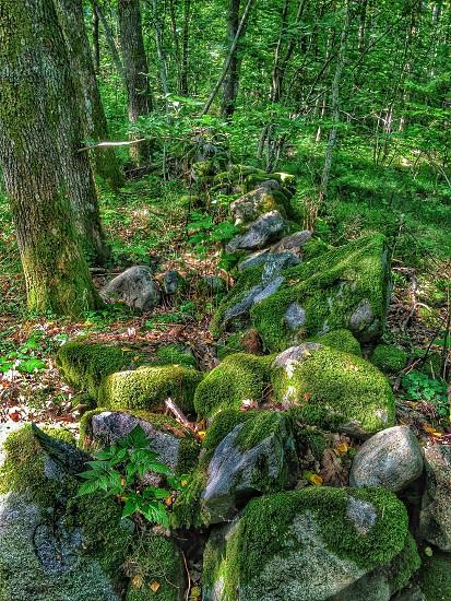grey rock green moss photo