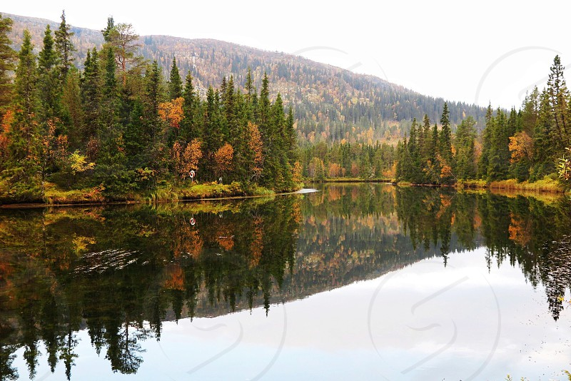 clear calm water surrounded with green and brown tall pine trees photo