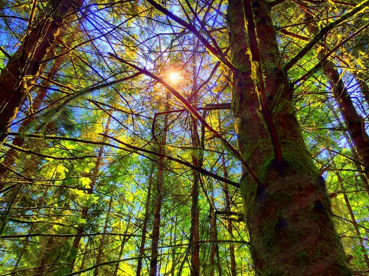 Woods trees sun light forest photo