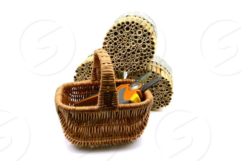 building an insect hotel with reed and bamboo sticks with garden shears on white isolated background. wild bee protection photo
