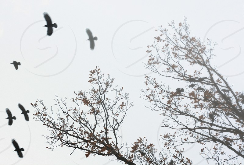 Trees and birds flight silhouettes photo