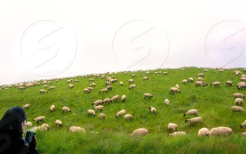 Green  photo